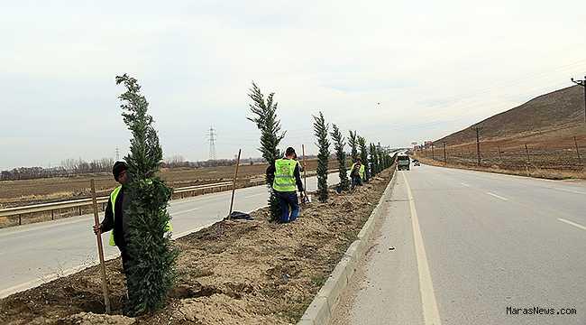 Büyükşehir'den refüjlere 3 bin ağaç