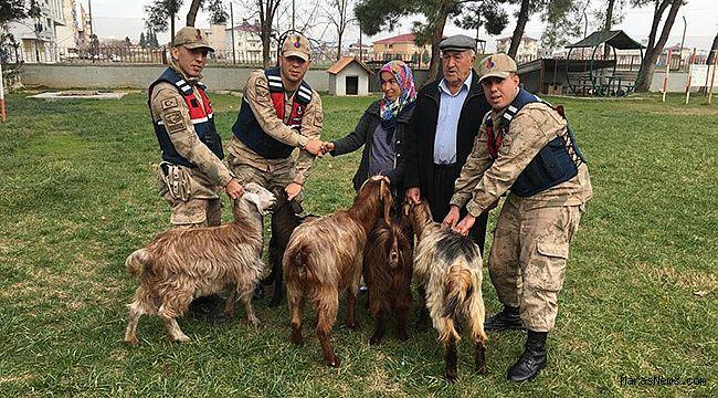 Hayvan hırsızları Jandarma'dan kaçamadı