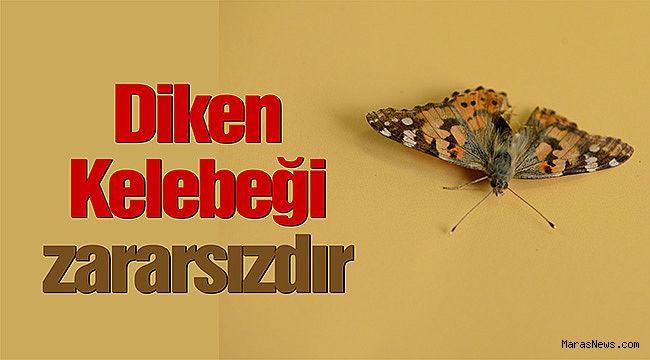 Diken Kelebeği zararsızdır