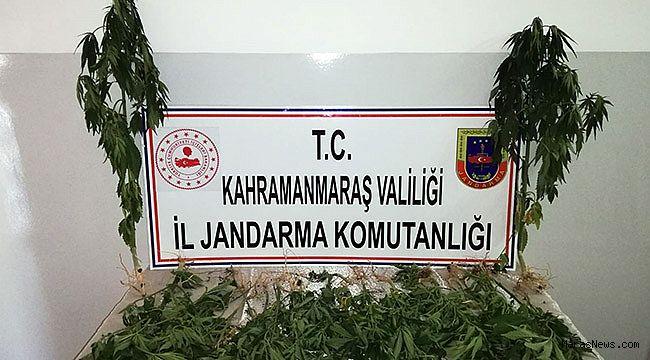 Jandarma'dan 'Kenevir' operasyonu: 1 gözaltı