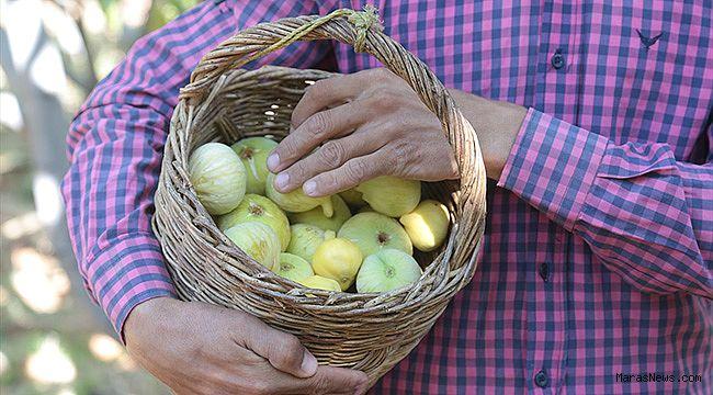 Kahramanmaraş'ın Abbas inciri tescillenecek