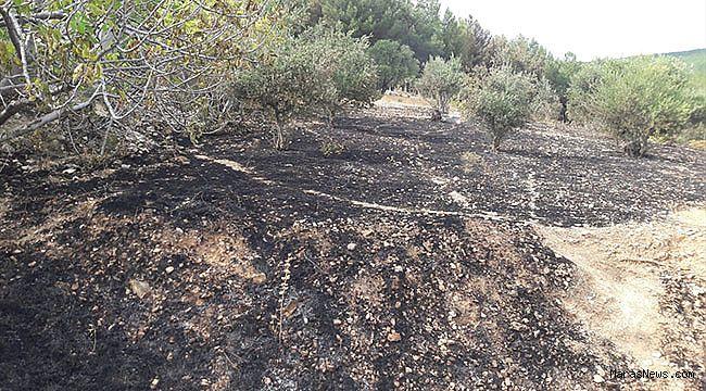 Zeytinlik alandaki yangın kontrol altına alındı