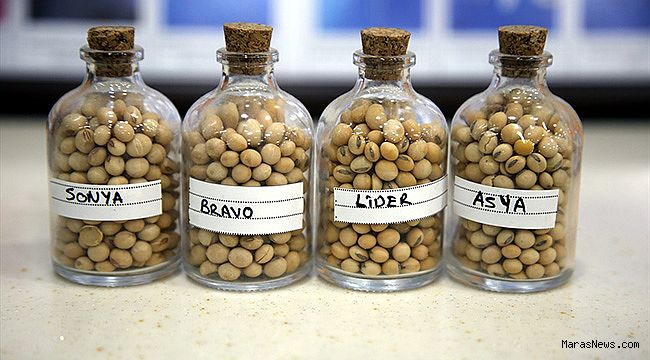 Soyada yerli tohumla üretim maliyeti azalacak verimlilik artacak