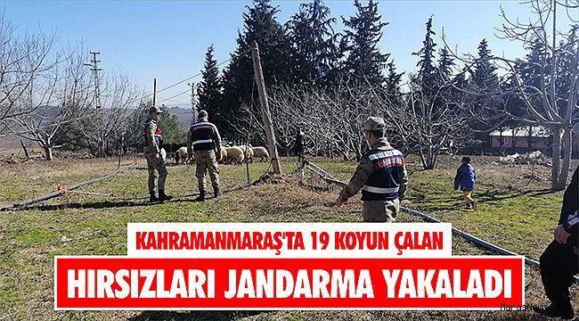 Kahramanmaraş'ta 19 koyun çalan hırsızları jandarma yakaladı