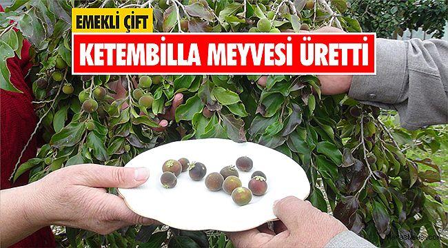 Emekli çift ketembilla meyvesi üretti