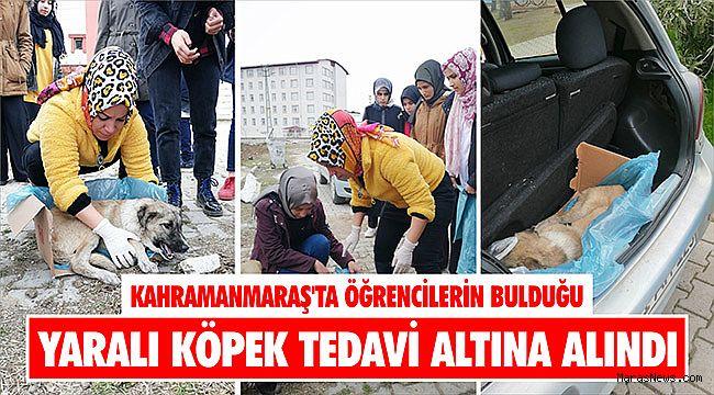 Kahramanmaraş'ta öğrencilerin bulduğu yaralı köpek tedavi altına alındı