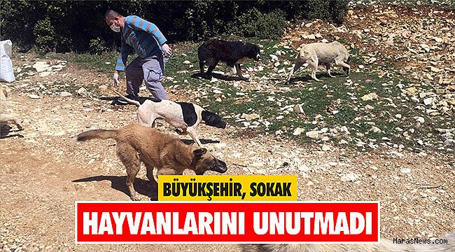 Büyükşehir sokak hayvanlarını unutmadı