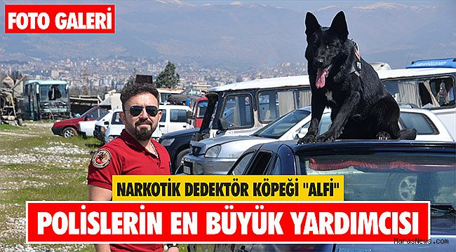Narkotik dedektör köpeği