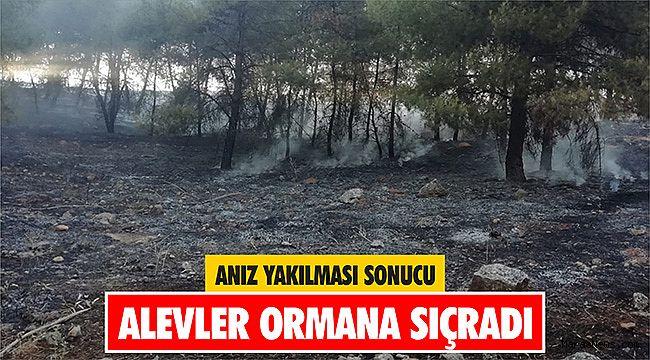 Anız yakılması sonucu alevler ormana sıçradı