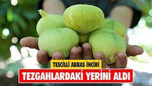 Tescilli Abbas inciri tezgahlardaki yerini aldı