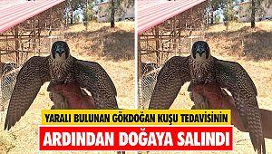Yaralı bulunan Gökdoğan kuşu tedavisinin ardından doğaya salındı