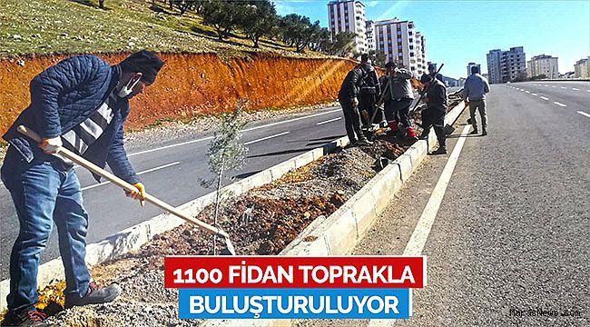 1100 Fidan Toprakla Buluşturuluyor