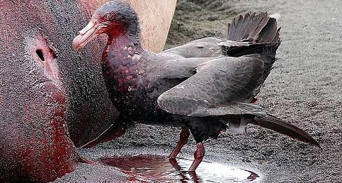 Dünyanın En Tehlikeli 5 Kuşu