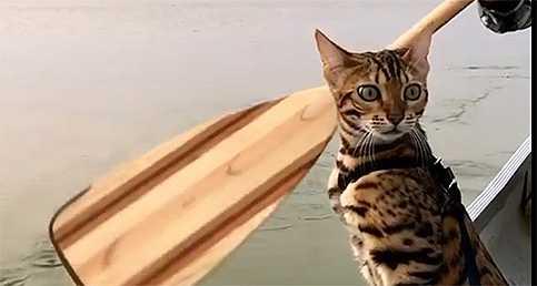 Kedinin Sandal Sefası