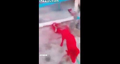 Kırmızı Spreye Boyanan Köpek